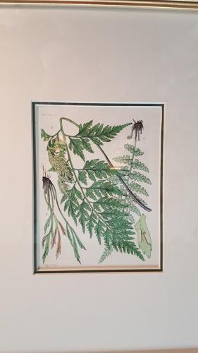 Set of 4 Antique Prints of Ferns