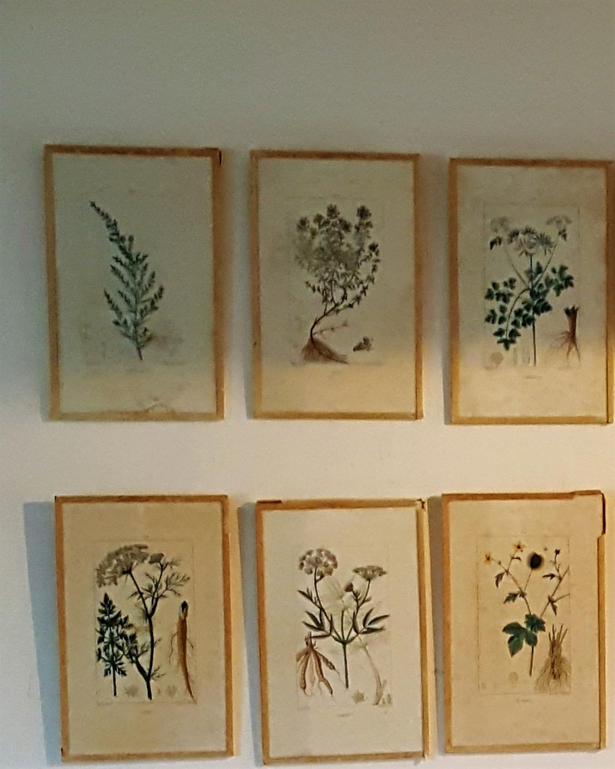 French Botanical Engravings