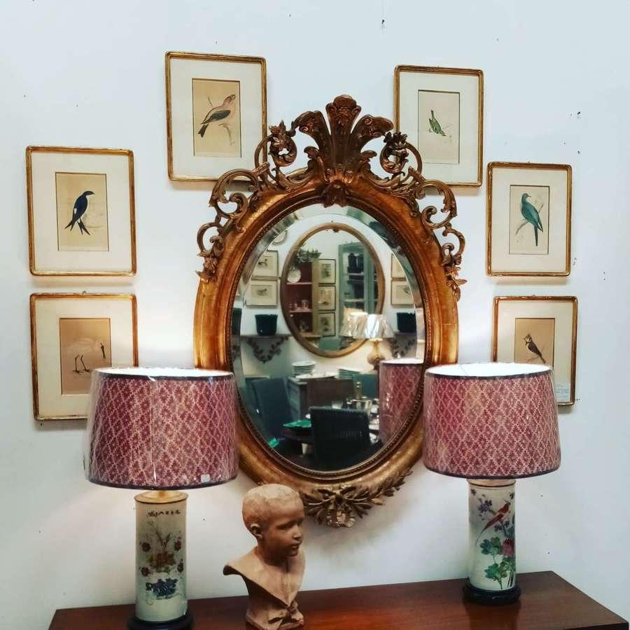 Set of 6 antique ornithological prints in gilt frames